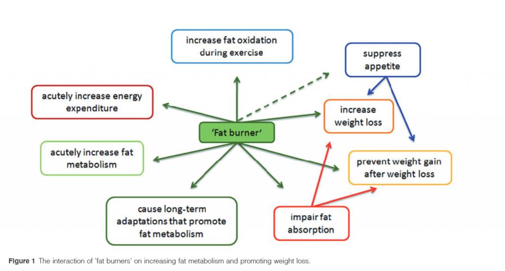 revisione delle capsule brucia grassi di metabolical