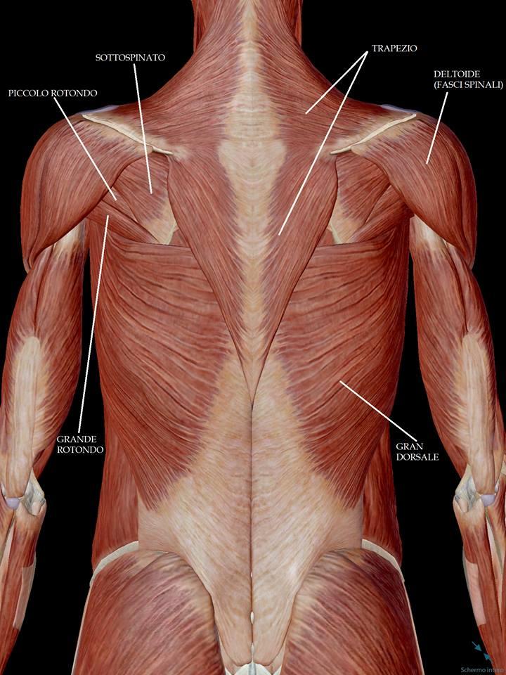 esercizi per la parte centrale della schiena