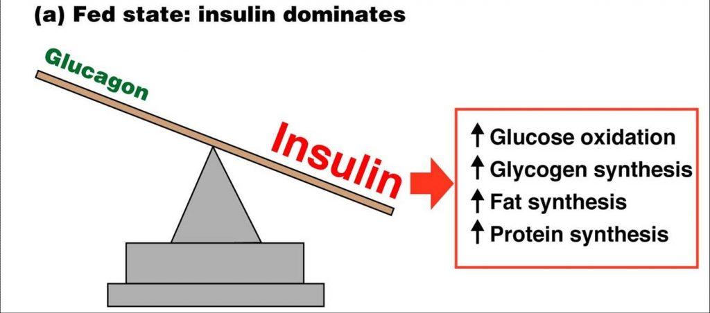 Ruolo dell'insulina