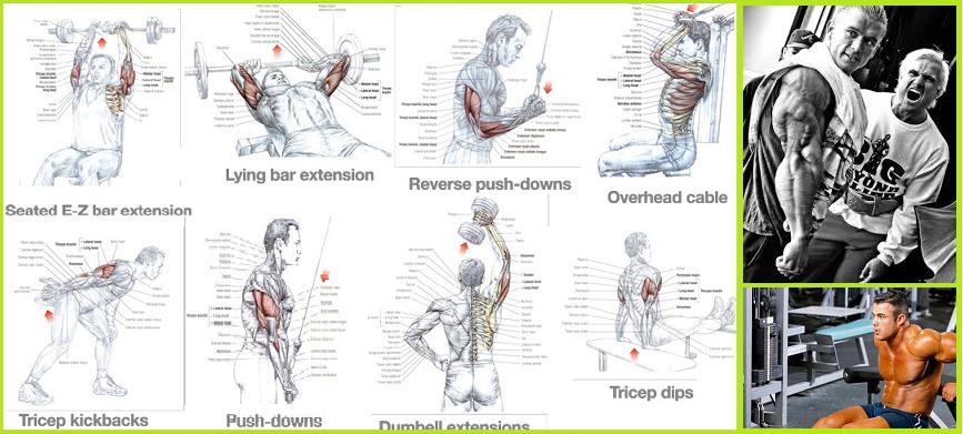 L'allenamento per far crescere i tricipiti - Bodybuilding